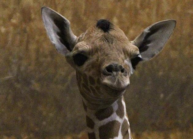 Courtesy Binder Park Zoo